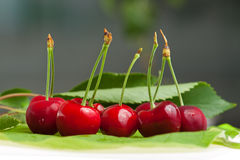 Sweet cherry. Fresh sweet cherry lies on green leaf royalty free stock images