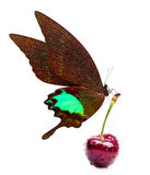 Sweet cherry and beautiful butterfly Stock Image