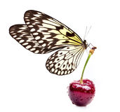 Sweet cherry and beautiful butterfly Stock Images