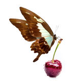 Sweet cherry and beautiful butterfly Royalty Free Stock Images
