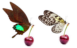 Sweet cherry and beautiful butterfly Stock Photography