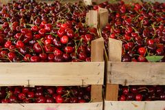 Sweet cherry fruit in crates sorted for market place royalty free stock photos