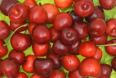 Sweet cherry fruits. Fruits of a sweet cherry against green leaves Royalty Free Stock Photo