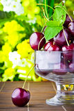 Sweet cherry fruits in glass goblet Stock Photo