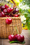 Sweet cherry fruits in wicker basket Stock Images