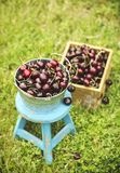 Sweet cherry on green grass background Stock Photo
