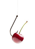 Sweet cherry on the hook Stock Photos