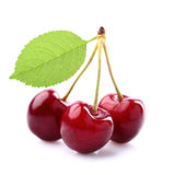 Sweet cherry. With leaf in closeup Royalty Free Stock Photo