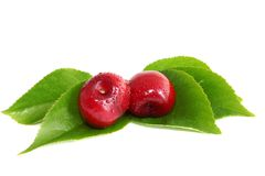 Sweet Cherry On Sheet Stock Photos