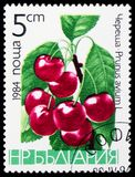 Sweet Cherry (Prunus avium), Friuts serie, circa 1984. MOSCOW, RUSSIA - JANUARY 4, 2019: A stamp printed in Bulgaria shows Sweet Cherry (Prunus avium), Friuts royalty free stock photos