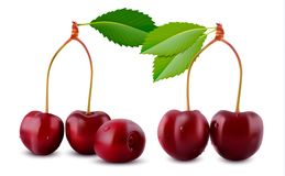 Sweet Cherry in realistic 3D style Vector illustration  Royalty Free Stock Photography