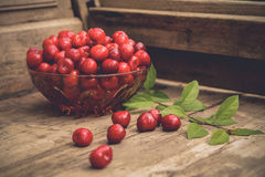 Sweet cherry Royalty Free Stock Image