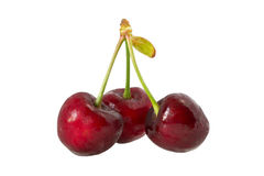 Sweet cherry. Three cherries on the counterfoil. Isolated. White background Royalty Free Stock Images