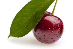 Sweet cherry under leaf Stock Photos