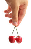 Sweet chery in hand Royalty Free Stock Images