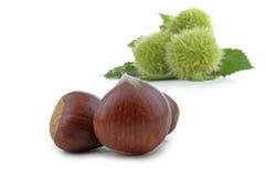 Sweet chestnut Royalty Free Stock Photo
