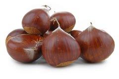 Sweet chestnut Royalty Free Stock Photos