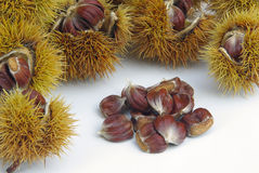 Sweet chestnut Stock Photography