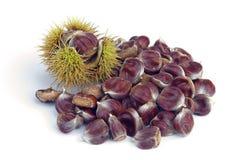 Sweet chestnut. On white background, sweet chestnut 07 stock image