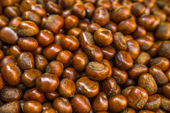 Sweet chestnut background, soft focus Stock Image