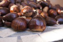 Chestnuts brown in autumn. Sweet chestnut browns are one of the symbols of the fall season Royalty Free Stock Photos