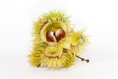 Sweet chestnut fruit Royalty Free Stock Photo