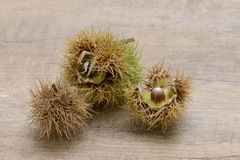 Sweet chestnut Stock Photo
