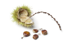 Sweet chestnut seeds Stock Image