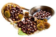 Sweet chestnut on white background. Royalty Free Stock Photo