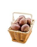 Sweet chestnut on white background Stock Photography