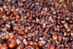 Sweet chestnuts 2. Detail of many different sweet chestnuts Stock Photo