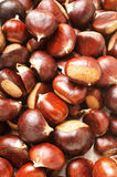 Sweet chestnuts. Texture for background Royalty Free Stock Photography