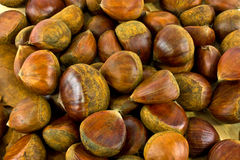 chestnut background Stock Photography