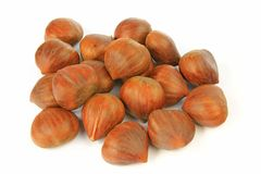 Sweet chestnuts (Castanea sativa) Stock Photography