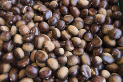 Sweet Chestnuts Stock Image