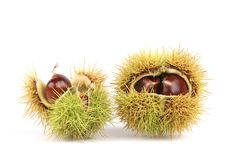 Sweet Chestnuts isolated on a white background Royalty Free Stock Image