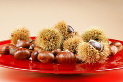 Sweet chestnuts on a red plate. Sweet chestnuts and chestnut husks on ared plate. Light brown background with lot of copy space. Selective focus Stock Image