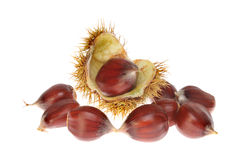 Sweet chestnuts Stock Photo