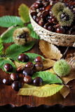 Sweet chestnuts in wicker basket. Close up of sweet chestnuts in a wicker basket. Focus selective Stock Photography