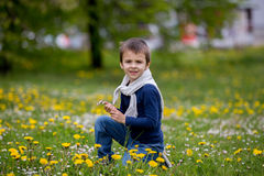 Sweet child, boy, gathering dandelions and daisy flowers Royalty Free Stock Photo