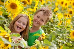 Sweet children in sunflower field Stock Image