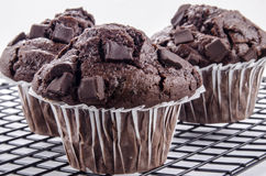 Sweet chocolate muffin on a cooking rack Stock Photography