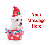 Sweet Christmas puppy. Cute white maltese dog wearing a Christmas hat, with space for your copy Royalty Free Stock Photography