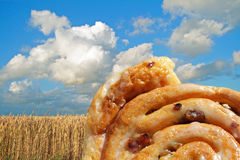 Sweet cinnamon raisin buns. In front of wheat Stock Images
