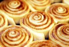 Sweet Cinnamon Rolls. Ready to rise and bake, homemade cinnamon rolls Stock Photography