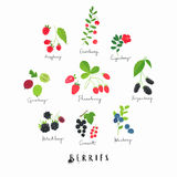 Sweet Clip Art Berry Fruits Royalty Free Stock Image