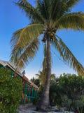 Sweet coconut tree on tropical island Stock Photo
