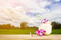 Sweet coconuts water with drinking straw and orchid flower on wooden table. Coconut tropical fruit with green field Stock Photography