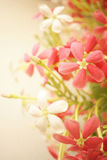 Sweet Color Flowers In Soft Style On Mulberry Paper Texture Stock Photos