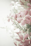 Sweet Color Flowers In Soft Style On Mulberry Paper Texture Stock Image